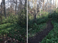 Macomb-Trail-Before-After-1
