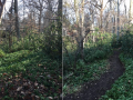 Macomb-Trail-Before-After