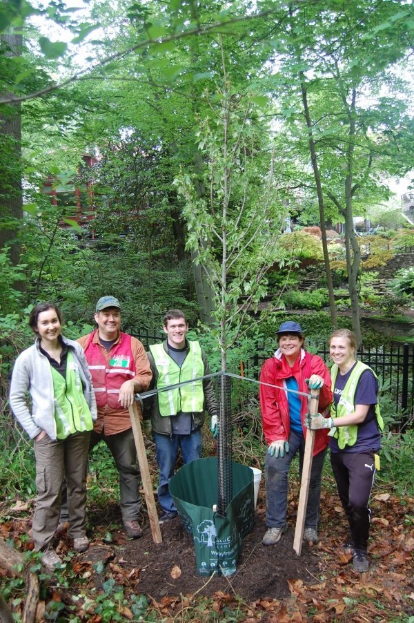 Casey Trees Volunteers planting a tree at Tregaron
