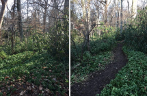 Check Out Our New Trail Restoration!