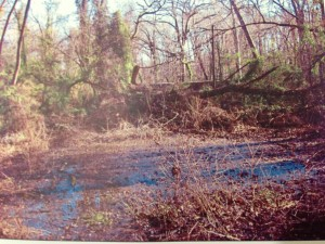 "The ""lily"" pond before rehabilitation -- 2005"