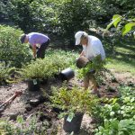 Volunteers planting wild gardens at Tregaron