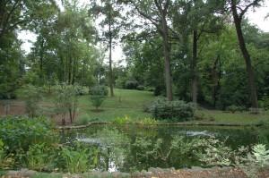 Tregaron's restored lily pond.