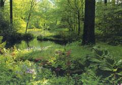 Future lily pond