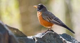 Fall Bird Walk with Birding Expert Jim Nelson @ Tregaron Conservancy