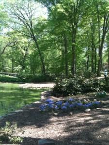 treg new plants at pond