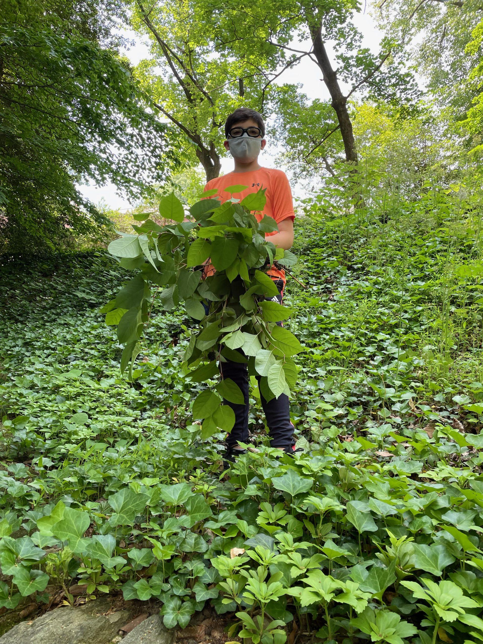 Griffin Miller weeding at Tregaron Conservancy
